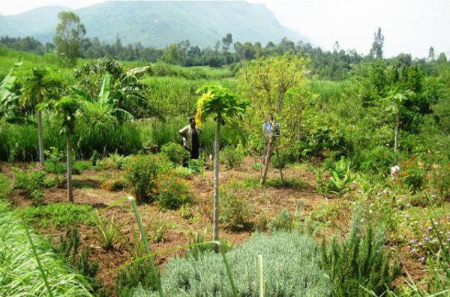 Kajulu Medicinal garden